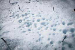 Bacteria may accelerate glacier melting
